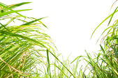 Isolated on a white background under the weeds — Stock Photo