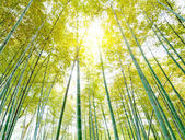 Bambus — Stockfoto