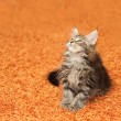 The kitten sits on a carpet — Stock Photo