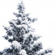 Fur-tree under snow — Stock Photo