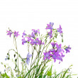 Wild flowers and grass - Stock Photo