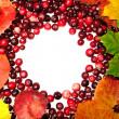 Stock Photo: Autumn leaves and cranberry
