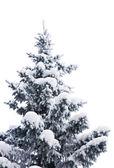 Fur-tree under snow — Stock Photo