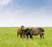 Three horses — Stock Photo
