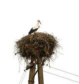 Stork in nest — Stock Photo