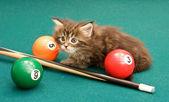 The kitten plays on a billiard table — Stock Photo