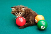 The kitten plays on a billiard table — Stock Photo