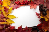 Background from autumn leaves — Foto Stock