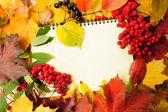 Hojas de otoño y escritura-libro — Foto de Stock