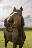 Plezier paard — Stockfoto