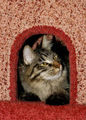 Cat in cats house — Stock Photo