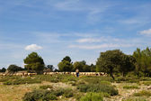 Sheep farming in Spain — Stock Photo
