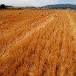Summertime in Spain - wheat field — Stock Photo