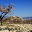 Spanish Castle with almonds tree flowering — Stock Photo