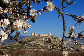 Spanish Castle with almonds tree flowering — Foto Stock