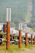Trans-Alaska Oil Pipeline (USA) — 图库照片