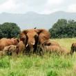 Herd of elephants, Kidepo Valley National Park (Uganda) — Stock Photo