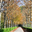 Aranjuez gardens, Madrid (Spain) - Stock Photo