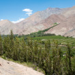 Elqui valley, Chile — Stock Photo #8848793