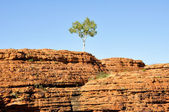 Lone tree in Kings canyon (Australia) — Stock Photo