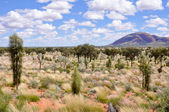 Australian desert — Stock Photo