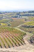 Vineyards, La Rioja (Spain) — Stock Photo