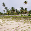Stock Photo: Beach in kerala, India