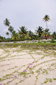 Stranden i kerala, Indien — Stockfoto