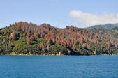 Shore at Cook Strait seen from the ferry (New Zealand) — Stock Photo