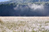 Rano mgły, milford sound (nowa zelandia) — Zdjęcie stockowe