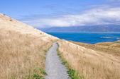 Kaikoura Peninsula Walkway, New Zealand — Stock Photo