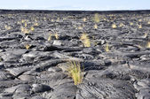 Lava field, Big Island, Hawaii — Stock Photo