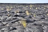Lava field, Big Island, Hawaii — Stock Photo