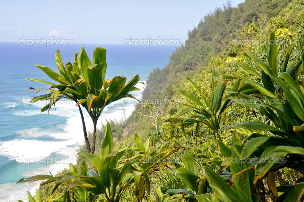 Na Pali Coast trail, kauai island (Hawaii) — Stock Photo #9023968