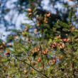Monarch Butterfly Biosphere Reserve, Michoacan  Mexico — Stock Photo