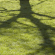 Stock Photo: Shadow