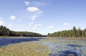 Wetland — Stock Photo