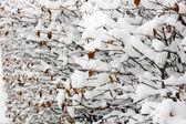 Snow — Foto de Stock