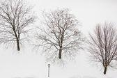 Trees on the snow — Foto de Stock
