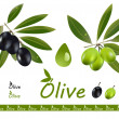 Olive set — Stock Vector