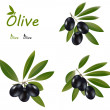 Dark olives — Stock Vector