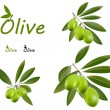 Green olives — Stock Vector