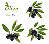 Donkere olijven — Stockvector