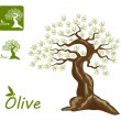 Royalty-Free Stock Vector Image: Olive tree