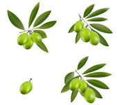 Green olive — Stock Vector