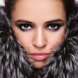 Beauty in fur — Stock Photo
