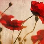 Vintage poppies — Stock Photo #8852886