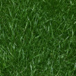 Close up of Lush Green Grass Lawn - Foto Stock