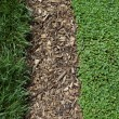Stock Photo: Grass Mulch and Ivy Background