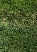 Wind fegte üppigen Gras hautnah — Stockfoto